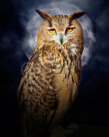 13601171-bubo-bubo-eagle-owl-night-bird-in-full-moon-cloudy-dramatic-night